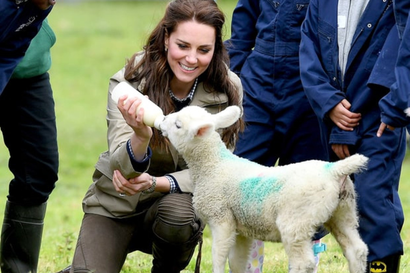 A kis bárányt, akivel összebarátkozott, viccesen csak Büdösnek nevezték el a farm dolgozói.