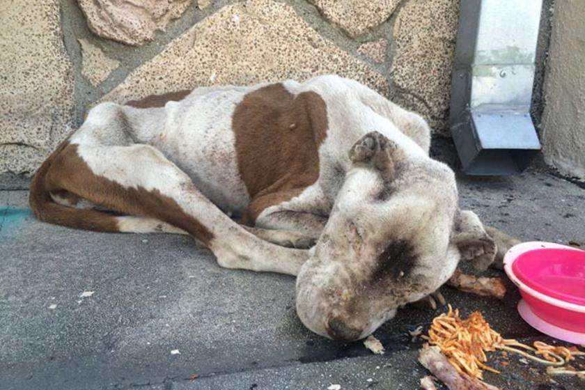 Ilyen szörnyű állapotban találtak rá a rendőrök az utcán. Nevét a hátán látható, szív alakú, aranybarna foltról kapta.