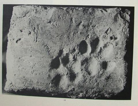 Már Ravilochanan Iyengar is megemlíti írásaiban a macskákat, ami bizonyíték arra, hogy az Indus-völgyi civilizáció (Kr. e. 2500 – Kr. e. 1700) idején is cicáztak már