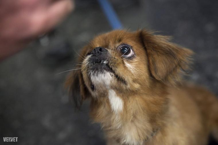 Emlékeznek Mandarinra? Ő például már boldog gazdis kutya.