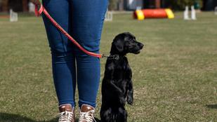 Rex kutyaotthon a felelős állattartásért