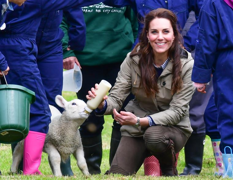 És ha már királyi család: Katalin hercegné a héten ellátogatott egy vidéki angol farmra, és még megitatott egy bárányt is