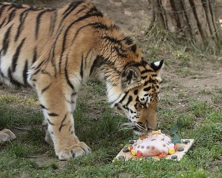 Fotó: veszprémi állatkert
