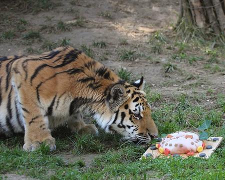 Fotó:veszprémi állatkert