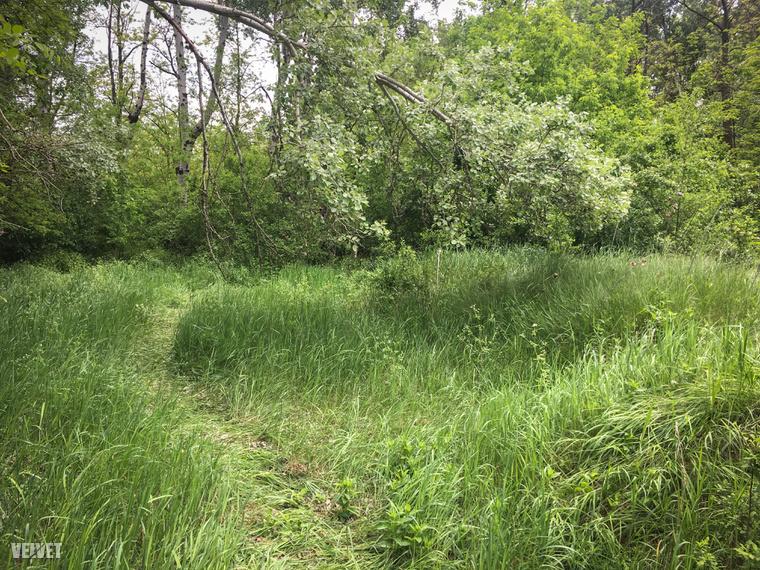 A letaposott növényzet alapján itt helyszínelhettek a rendőrök még múlt héten.