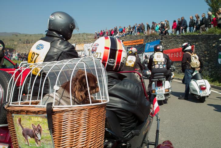 A Duna vagy mittoménmilyen oldalkocsiban kutyabörtönt rendeztek be. Még ezek az osztrákok!