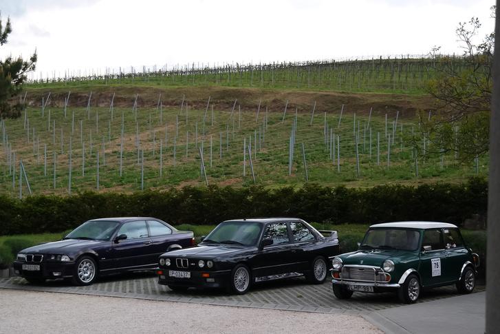 Jó háttér: a Tolnay Villa szőlői