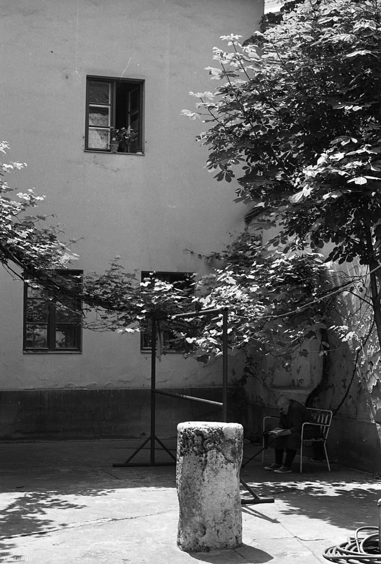 Olvasó nyugdíjas a védett természeti értéket képviselő szőlőtőke árnyékában.  A Bécsi kapu tér 8. udvara, 1981A pad takarásában látható szőlőtőke az egyik régi lakó szerint 1945 tavaszán bújt elő a háborús törmelék alól, és 1947-ben fordult termőre az aprócska udvaron. Védelem alá helyezése 1982-ben történt. Az egyemeletes, középkori maradványok felhasználásával épült kis palota élete kész regény, elég annyit említeni, hogy a legutolsó háziúr Esterházy Péter nagyapja, Móric gróf volt.