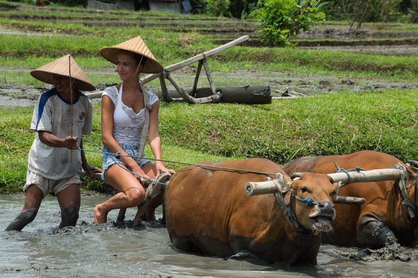 Franciska és Tamás ilyen felszabadultan élvezték a randit a rizsföldön.