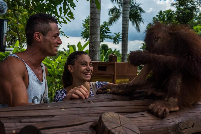 Nagyon megszerették ezt a kedves orángutánt.