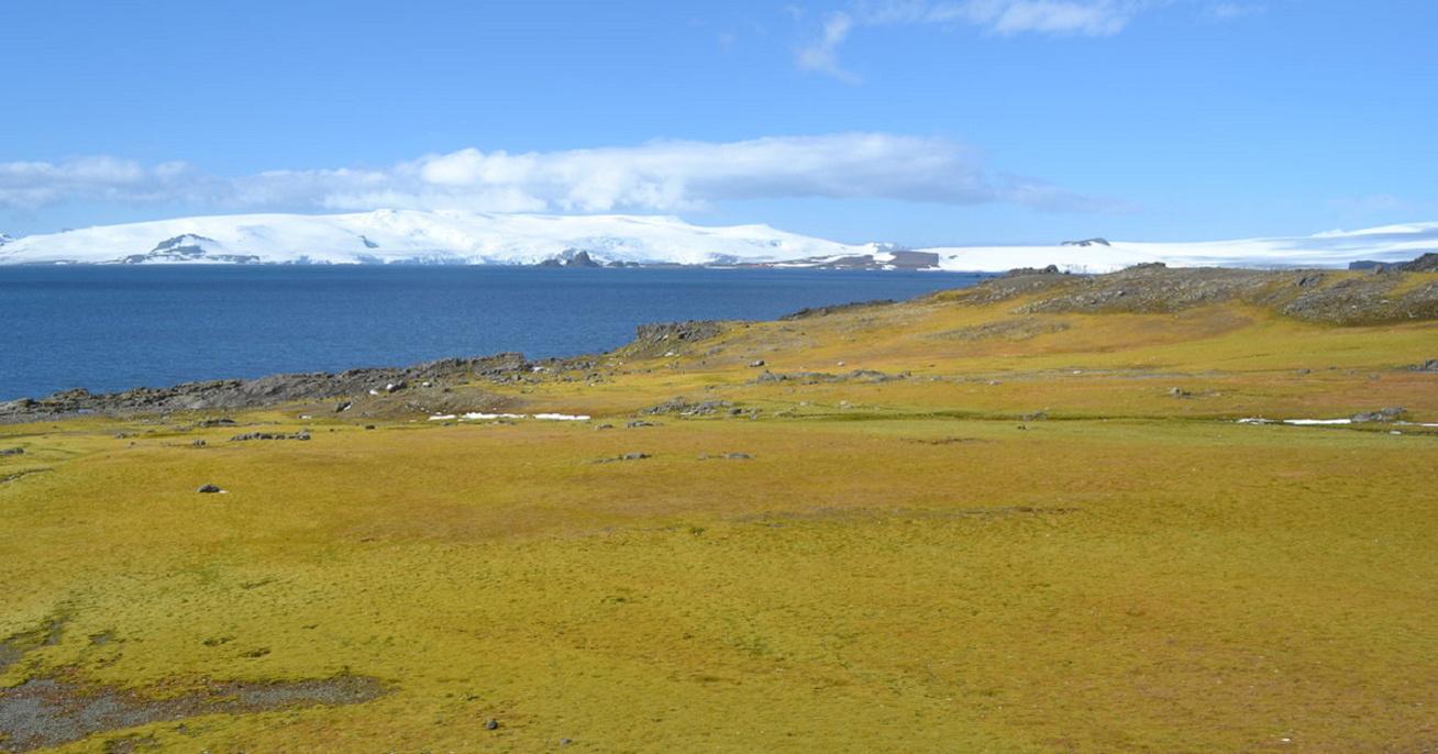 antarktisz-zold-nagy