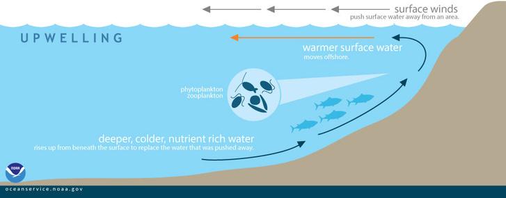 A szél hatása a tengerben lévő táplálék mozgására