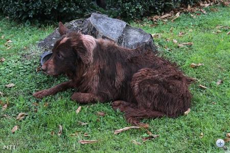 Az áradásból kimenekült kutya