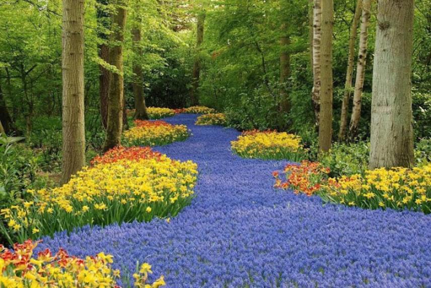 A növényeket néhol olyan sűrűn ültették, hogy pazar virágtengert hoznak létre.