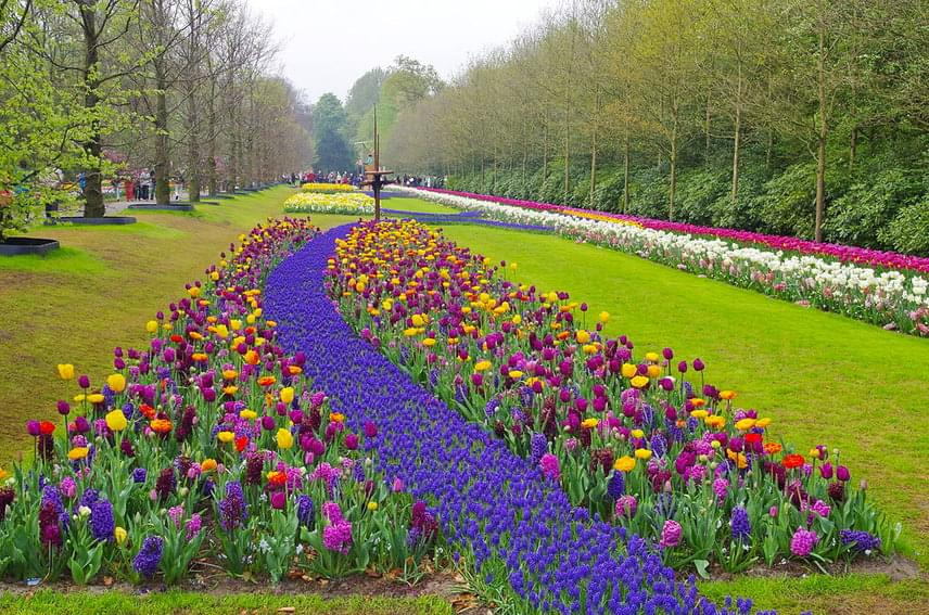 A virágoskert területén körülbelül száz nemesített tulipánfajta található, de természetesen más tavaszi virágokban, például nárciszokban és jácintokban is gyönyörködhetsz.