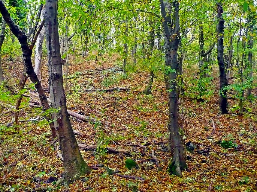 Ha kezdő túrázó vagy, a badacsonyi kirándulóerdő tökéletes úti cél, ugyanis több pihenőhely is kialakításra került a környékén. Ráadásul a Kisfaludy-kilátó nyújtotta lélegzetelállító panoráma mellett számos ritka növény- és állatfajjal is találkozhatsz itt.