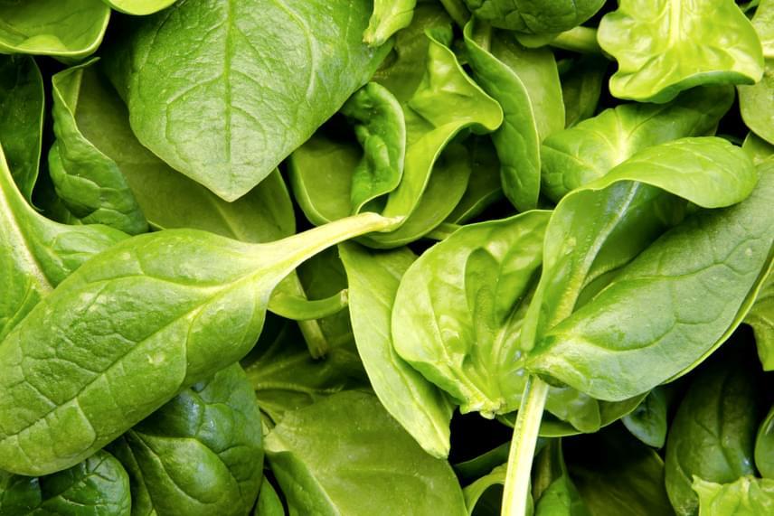Nem véletlen, hogy sokan előszeretettel fagyasztják le a később főzéshez felhasználandó vagy például más módon feldolgozandó, zöld leveles zöldségeket, mint amilyen a spenót és a sóska, semmiképp se fagyaszd azonban le őket, ha eredetihez hasonló állapotukban szeretnéd őket felhasználni, például salátakészítéshez.