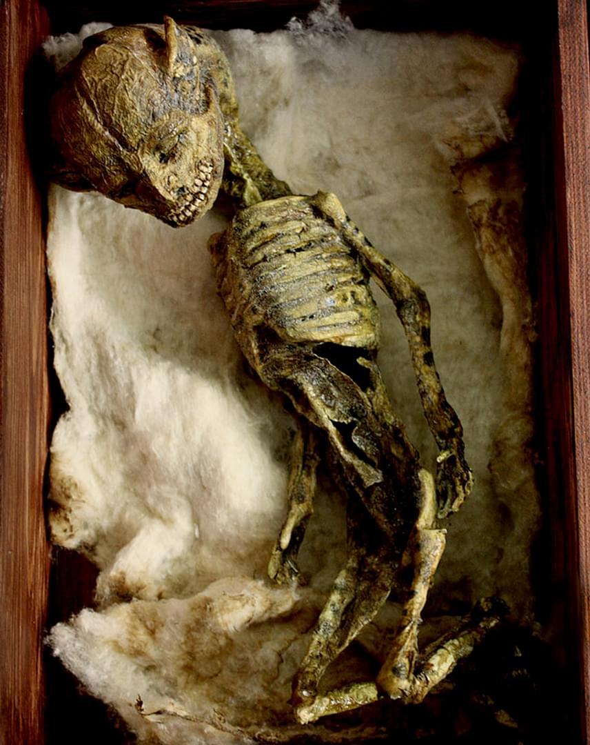 A különös csontvázakra valóban egy londoni pincében találtak rá 2006-ban, ám már akkor is egyértelmű volt, hogy emberi kéz hozta létre őket.