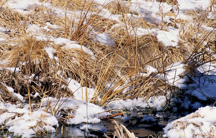 Elakadtál? Akkor a bal alsó sarok környékén keresgélj, a második hóbuckán a fűszálak között kirajzolódik egy sárszalonka.
