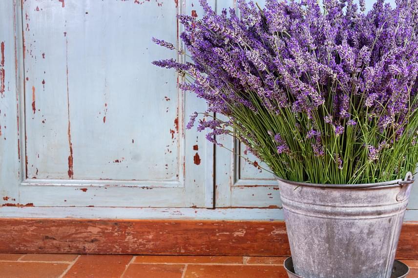 Nem is kell mondani, hogy a levendula illata, ezáltal pedig rovarűző hatása is akkor érvényesül a legjobban, ha élő növényként alkalmazod, csodás dísze lehet a kertnek és a balkonnak is.