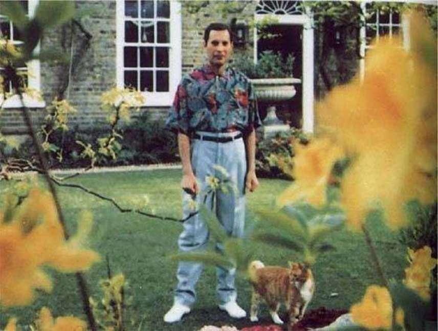 A 45 éves Freddie Mercury utolsó fotója 1991-ben készült. A Queen énekesét saját kertjében kapták lencsevégre. Az AIDS-ben szenvedő zenész betegségét halála előtti napon jelentette be, majd másnap elaludt örökre.