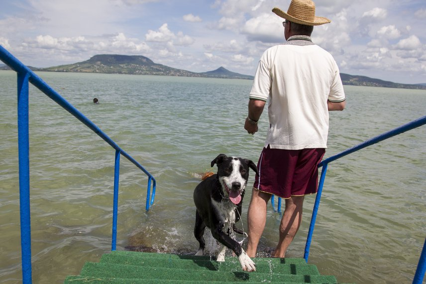A kutyastrand egyébként a kényelemtől sem mentes. A part tiszta, a vízbe pedig lépcsők vezetnek, így ha nem látnánk az ebeket a Balatonban, könnyen összetéveszthetnénk egy szokványos fürdőhellyel.