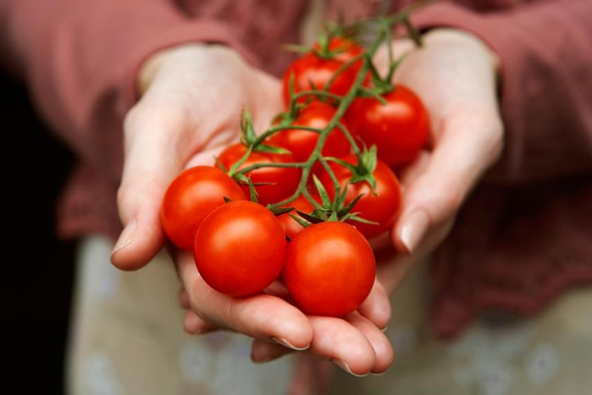 A paradicsomnak egy nagyon jelentős része víz, így titokban biztosítja szervezeted hidratáltságát, sőt, az éhséggel összekevert szomjat is csillapítja. A káliumban igen gazdag piros bogyók emellett természetesen csökkentik az elhízott szervezetben a gyulladást, kiegyensúlyozzák a nátriumban - például sóban - gazdag étrendet, illetve visszafogják más zöldségek puffasztó hatását. Készíts belőlük paradicsomturmixot, szószokat, de ne feledkezz meg nyers fogyasztásukról sem!