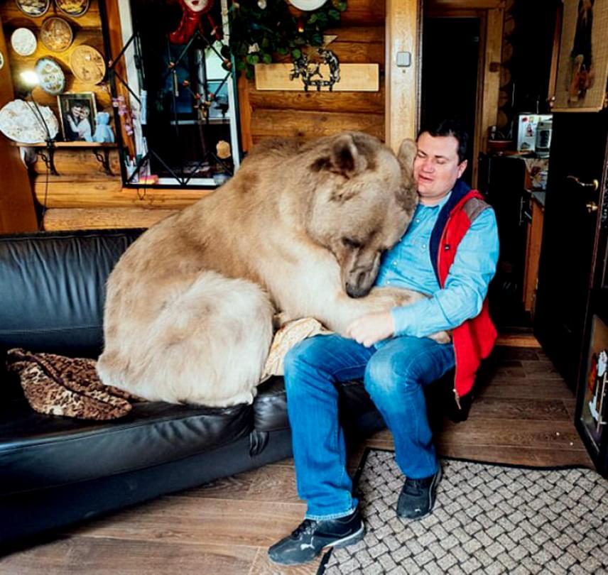 Persze azt sem bánja, ha odakuporodhat a kanapéra a gazdái mellé.