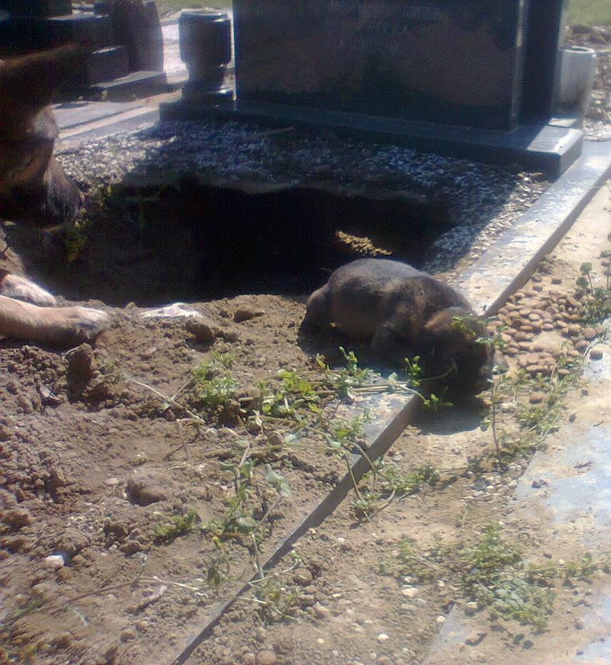 A helyiek megsajnálták az otthontalan állatokat, és időről időre élelmet és vizet visznek nekik. A felbátorodott kiskutyák időnként már ki is merészkednek a lyukból.