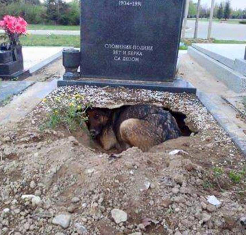 Kívülről nem látszott, hogy a kutya őriz valamit: mindenki azt gondolta, hogy csak a gazdája emléke miatt jár a temetőbe.