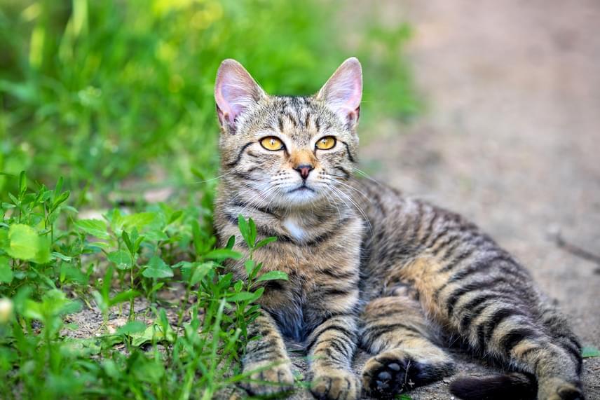Hasonlóképp vannak ezzel a cicák is, így ha a kis kedvencet szeretnél távol tartani a virágágyásoktól, illetve a veteményestől, szintén érdemes ezt a módszert bevetned.