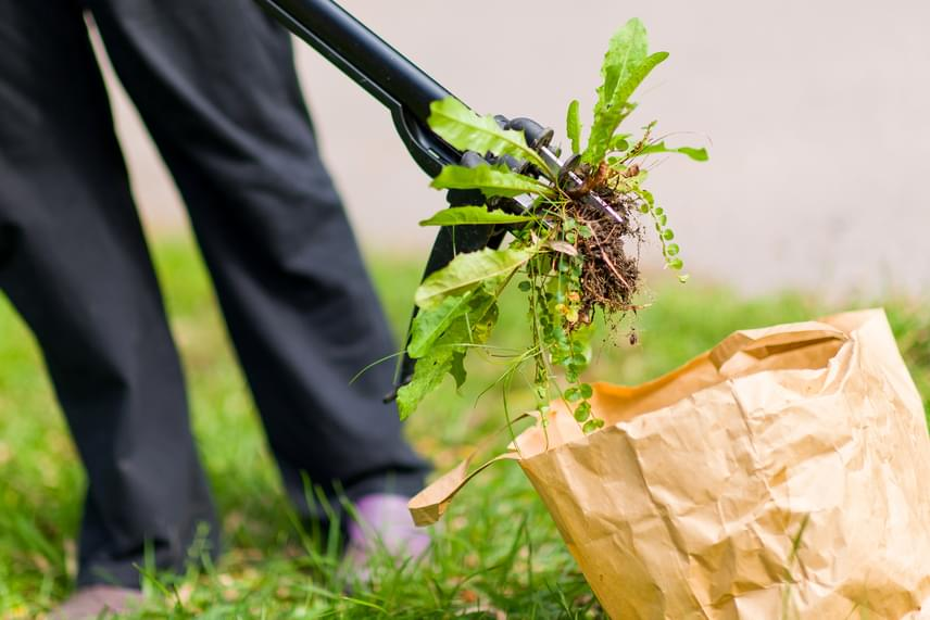 Bár a gyomokat a legjobb kézzel, illetve speciális eszközzel gyökerestől kiszedni a földből, nem véletlenül használják az ecetet is sokan természetes gyomirtó szerként, ugyanis egyszerű és olcsó módszert jelent. A savas kémhatás révén az ecetes lepermetezés feloldja a növények sejtjeinek membránját, ezáltal pedig kiszárítja és elpusztítja azokat, emiatt azonban nem célszerű olyan helyen alkalmazni, ahol értékes növényeket is elérhet.
