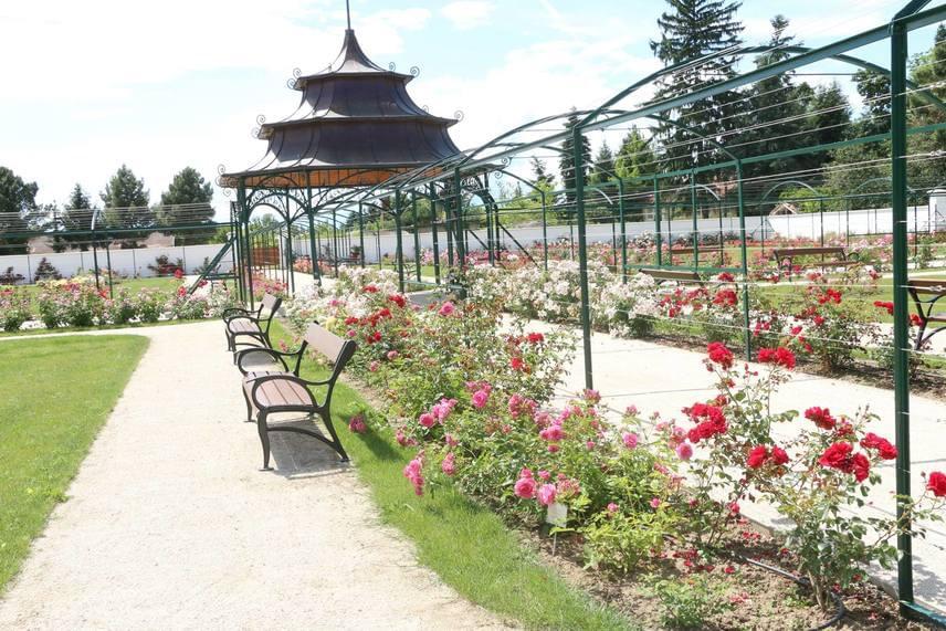 Több száz évre nyúlik vissza a múltban a fertődi Esterházy-kastély legszebb parkjának, Cziráky Margit Rózsakertjének a története. Az 1700-as években kialakított parkot ugyanis a grófnő kívánsága szerint formálták át és tették rendbe, eredetileg 20 ezer rózsatővel. A kastélyparkot idén felújították, és csaknem tízezer rózsatövet ültettek, amelyek a nyáron egyszerre kezdtek pompázni.