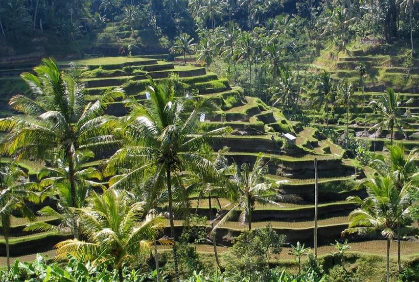 Csodás rizsföldek, izgalmas életképek, igazi vendégszeretet - ha Balira gondolsz, ezek lebegnek a szemed előtt. Amit biztosan megtalálsz a szigeten, az a kiegyensúlyozottság, a harmónia és a kedvesség. Lehetsz nászúton vagy családi nyaraláson, a hely biztosan el fog varázsolni. Egy dolgot azonban fontos tudnod, ha nem szeretnél csalódni: Balin nem találsz fehér homokos, idilli tengerpartot. Viszont minden más édes kárpótlás.