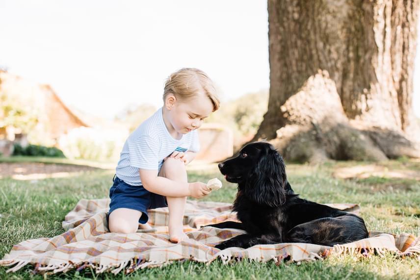 György a család kutyusával, Lupóval rosszalkodik: éppen fagyival kínálja a család kis házi kedvencét, aki örömmel fogadja a tiltott csemegét.