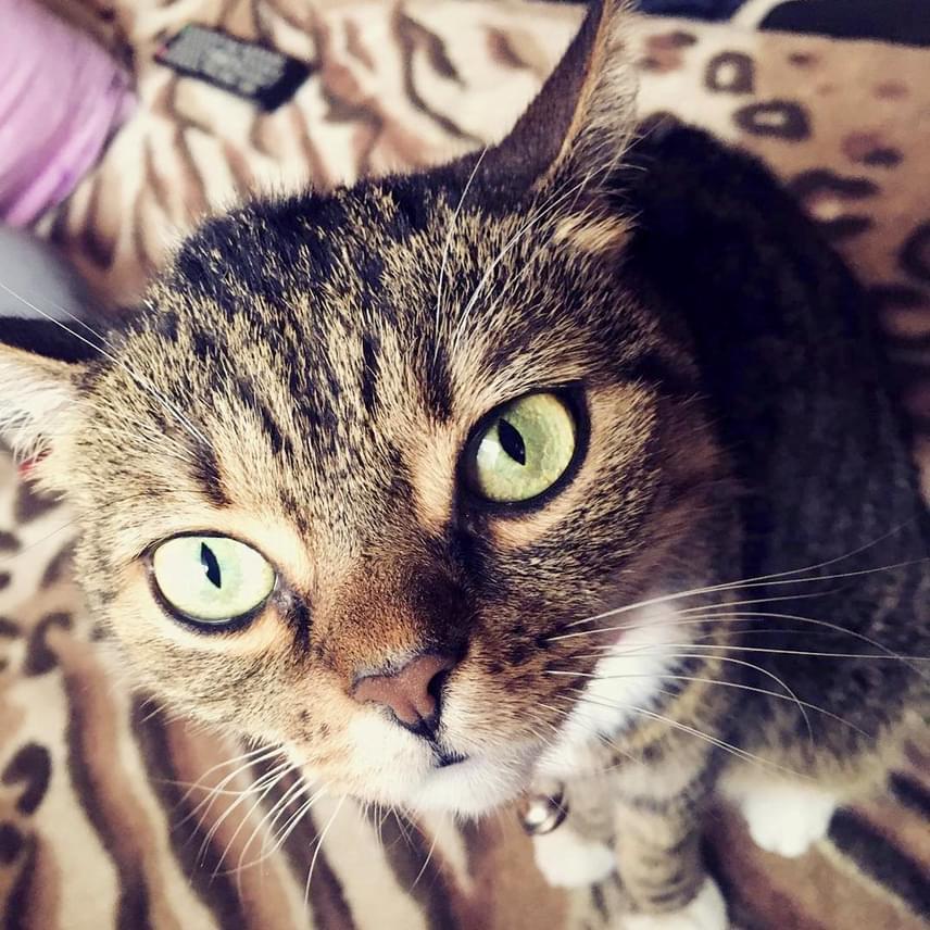 """""""Nagyin cuki pisze, kell nekem ez a macska"""" - írta egy rajongó az új kép alá, a többiek pedig érdeklődtek, hogy mikor készül majd új videó a cicáról."""