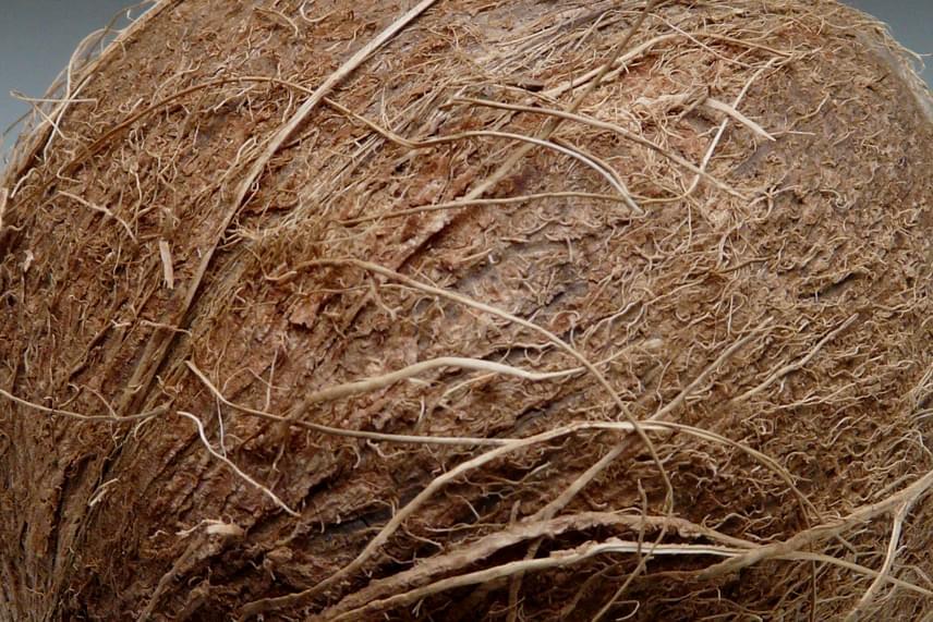 Dr. Stefanie Schmier tanulmányozta és elemezte a kókuszdió héjának felépítését, mivel az a pálmafák tetejéről komoly magasságokból zuhan le a földre, mégsem pattan szét vagy sérül meg sem kívül, sem belül. A kutató úgy gondolja, hogy egy ilyen erős falú ház képes lenne túlélni egy földrengést, megvédve attól a benne lakókat is.
