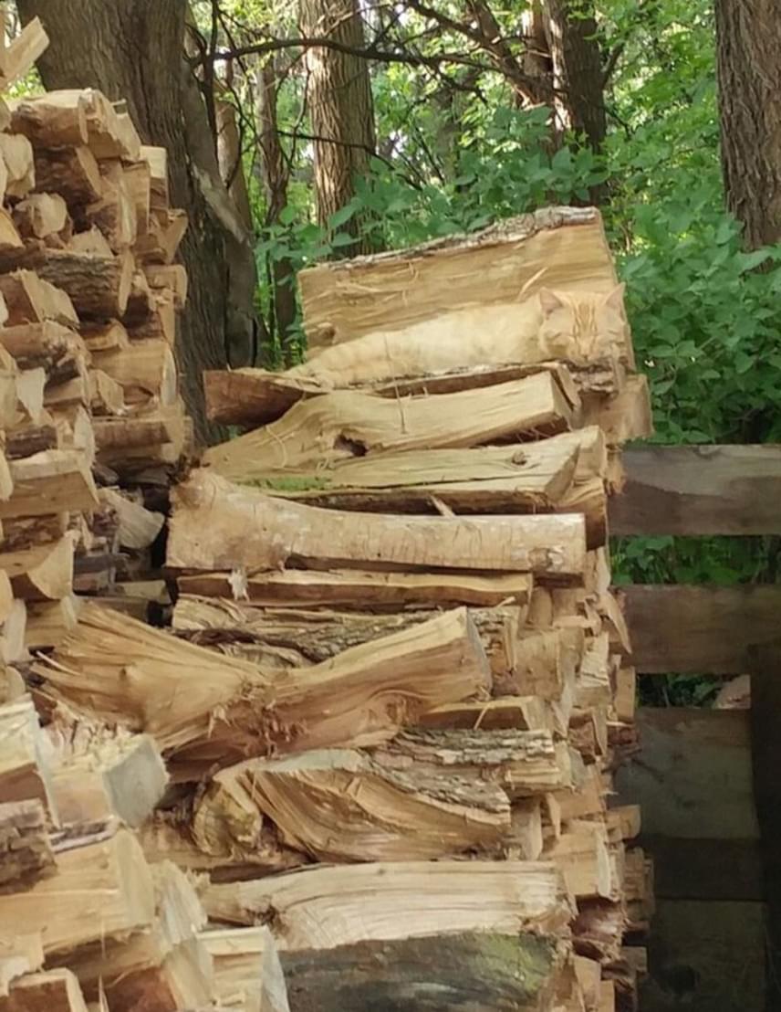 картинка с дровами нашли кота тогда