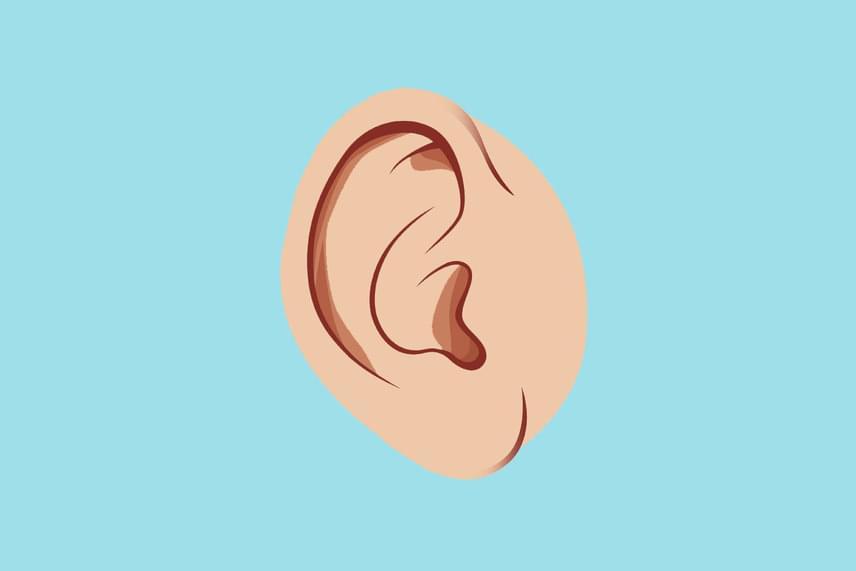 Félhold alakúA félhold fül arra utal, hogy a férfi figyelembe veszi párja érzéseit és elvárásait, kompromisszumkész, és erőssége az őszinteség.