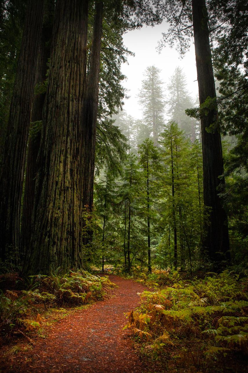 Humboldt Redwoods Nemzeti ParkA világon egyedülálló kaliforniai Redwood Nemzeti Park területe 455 négyzetkilométer. Itt található a föld legtöbb parti mamutfenyője. A csodálatos óriásfák felfoghatatlanul hosszú életűek, akár 1500 évig is élhetnek. A nemzeti parkban álló 600 éves Tall Tree, magyarul Magas Fa a világ egyik legnagyobb fája a maga 112 méterével. Az ősi erdők a park harmadát borítják, a többi részen fenyőfajokból, juharfákból álló erdők találhatók.