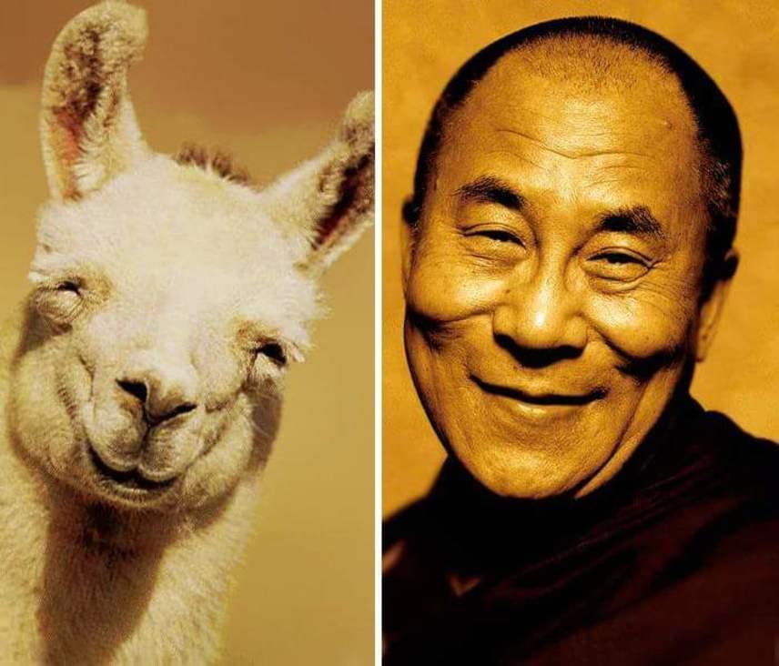 A dalai láma a tibeti buddhizmus legmagasabb rangú tanítója. A 14. dalai láma, Tendzin Gyaco már 81 éves, a mosolya pedig olyan imádnivaló, akár egy lámáé.
