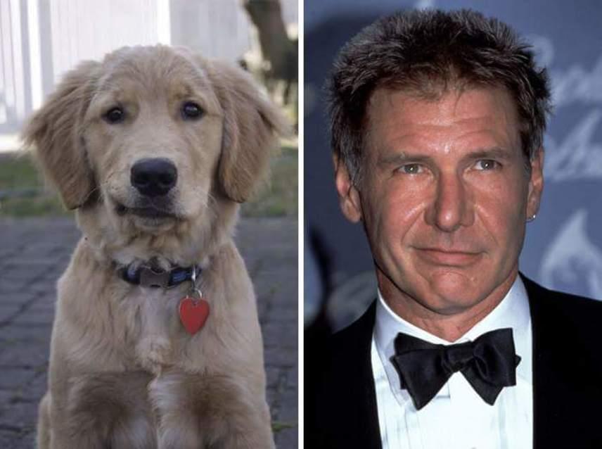 Harrison Ford a Csillagok háborúja - Az ébredő Erőben újra eljátszotta Han Solót. A 74 éves amerikai színész legjobb barátja Chewbacca volt, de ezt a kutyust is simán örökbe fogadhatná.