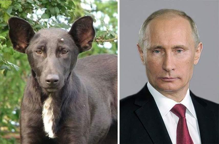Vlagyimir Putyin orosz elnök a A Forbes magazin három évvel ezelőtti felmérése szerint a világ legbefolyásosabb embere. Szigorú tekintetét látva ezt nem is vitatjuk, és nagyon reméljük, hogy a kutyákat nem engedi majd szabadon.