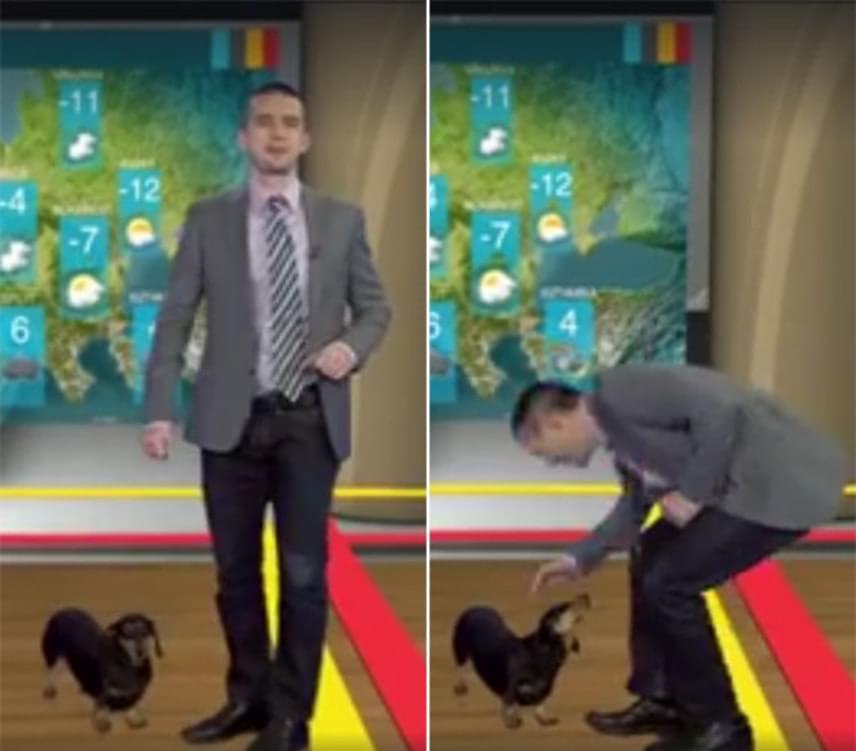 Néhány nappal újév után az RTL Klub időjárás-jelentése közben egy cuki kiskutya lepte meg a gyanútlan Véber Istvánt. A négylábú vendég az egyik kolléga tacskója, Fruzsi volt, aki egyáltalán nem hozta zavarba az időjóst - Véber ugyanis lehajolt, majd megsimogatta a szőrmókot, aki ennek nagyon örült.