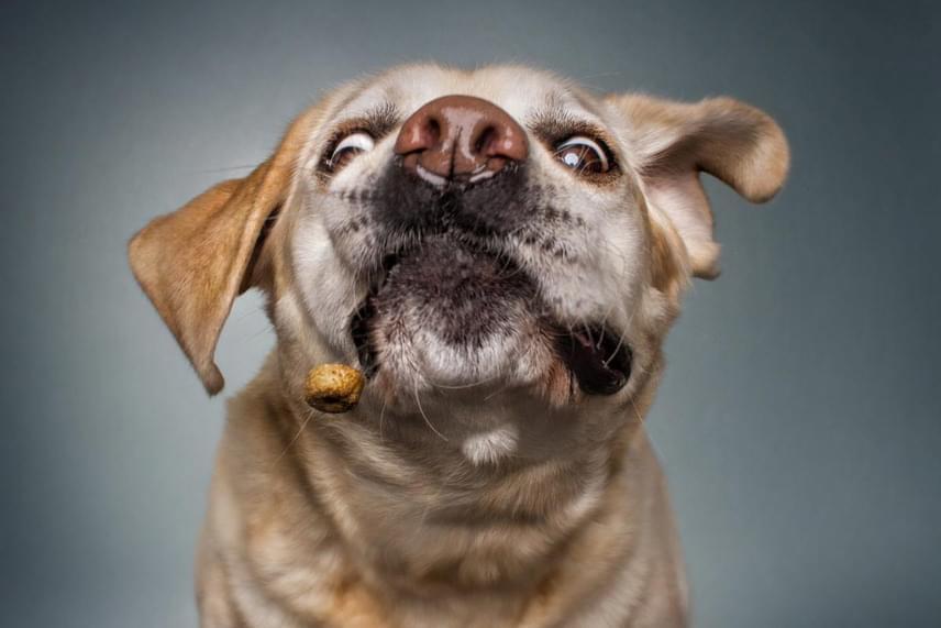 A kutyák arcán egyszerre jelenik meg az izgatott várakozás, a beteljesülés és a hála nyoma.