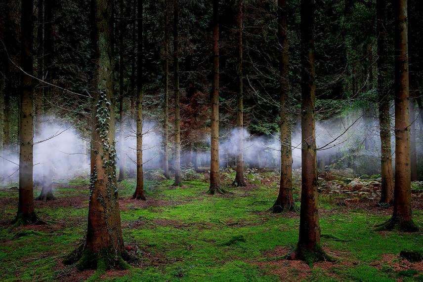 Rengeteg időt tölt az erdőben, ezért nem csoda, ha sok különleges pillanatot sikerül elkapnia.