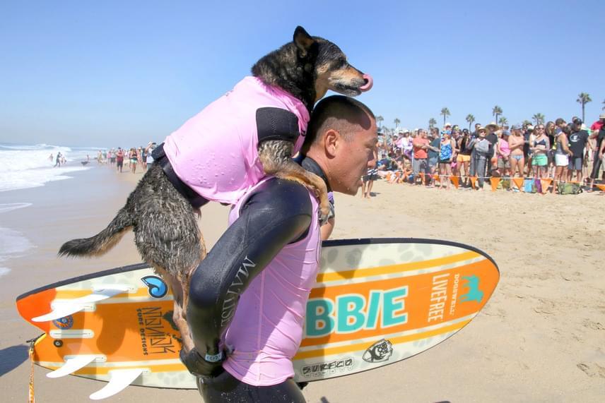 A kutyák nagyon fegyelmezetten viselkedtek, és a legjobb tudásuk szerint versenyeztek.
