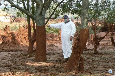A fákra ki ad védőruhát?