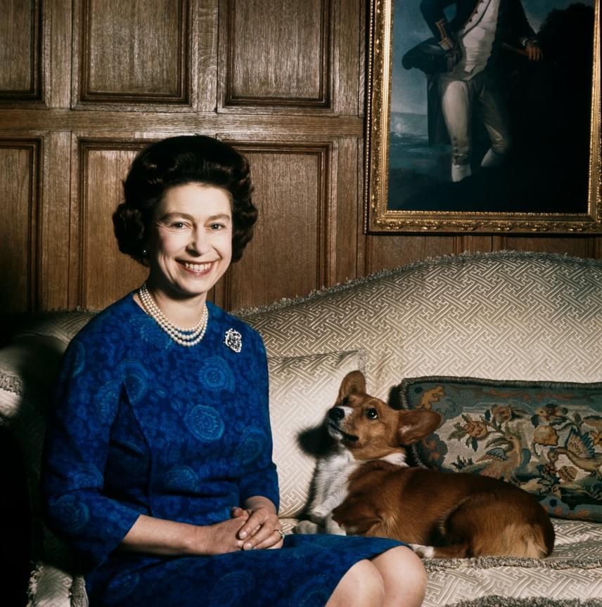 A királynő mindig is előszeretettel fotózkodott cuki házi kedvenceivel. Erzsébet fiatalkorától kezdve legendásan nagy kutyabarát, de a lovakat is imádja.