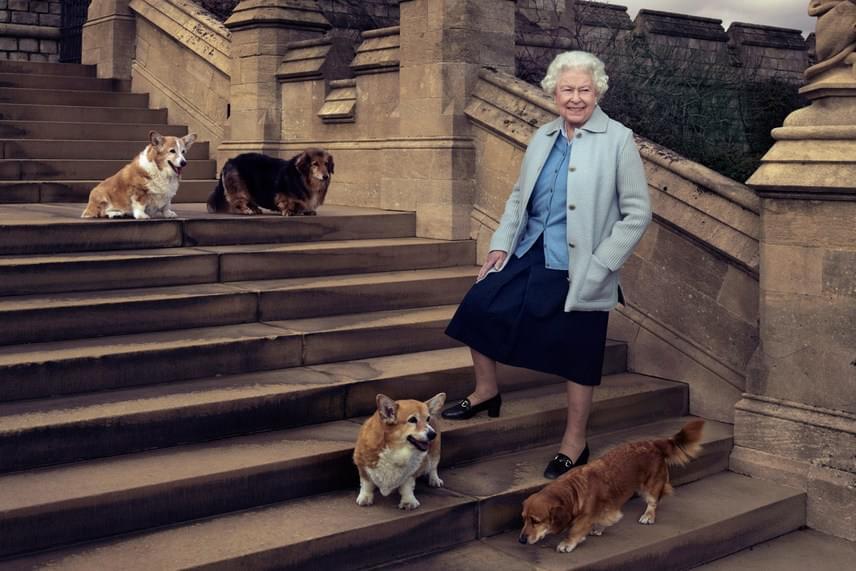 A világhírű fotós, Annie Leibowitz a királynő 90. születésnapja alkalmából készítette ezt a remek portrét a windsori kastély lépcsőjén. II. Erzsébetnek Holly elvesztésével már csak három kutyusa maradt: Willow, Vulcan és Candy - utóbbi kettő corgi-tacskó keverék.